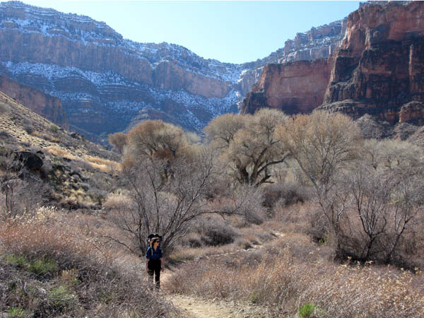 Lucy descending through the cottonwoods of Indian Garden. South Rim above.
