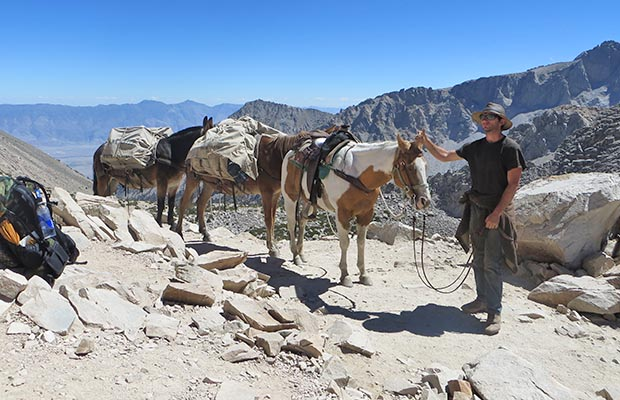 A mule train crossing the summit of Kearsarge Pass