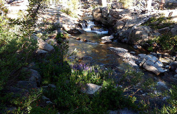 A lovely section of the West Fork of the Walker River at 9,400'