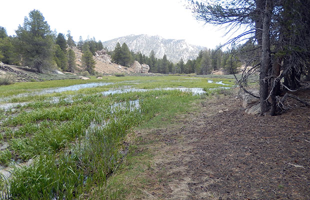 A very wet section of Dry Creek Meadow, looking east