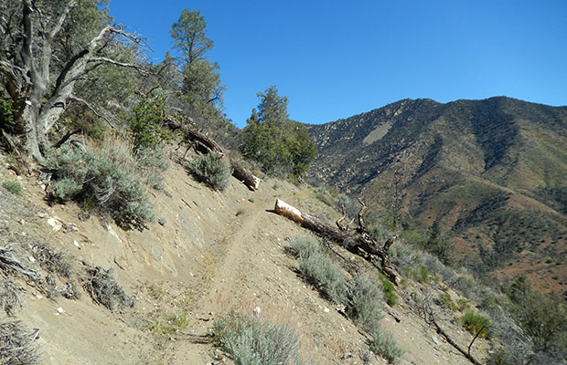 Part of the well graded, well formed trail