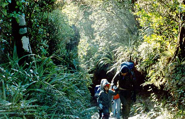 1988: The old track from North Egmont to Razorback ridge. Jordan and Peter in front.